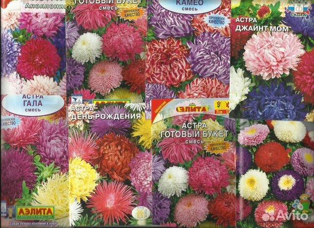 фото цветов однолетников:
