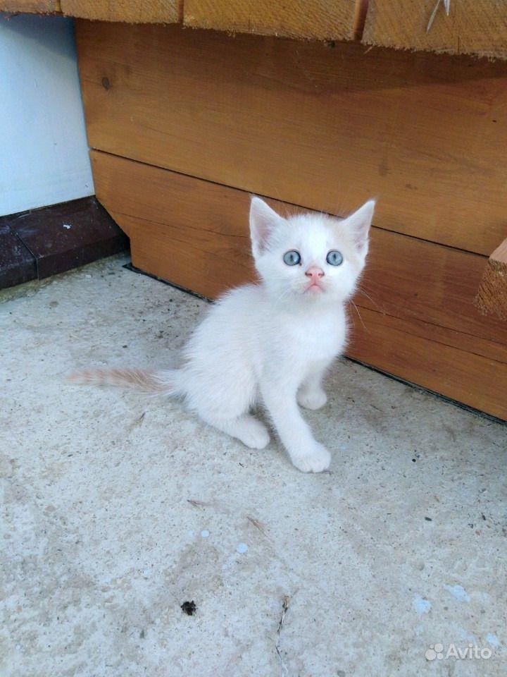 Отдам котят в Анапе - фотография № 9
