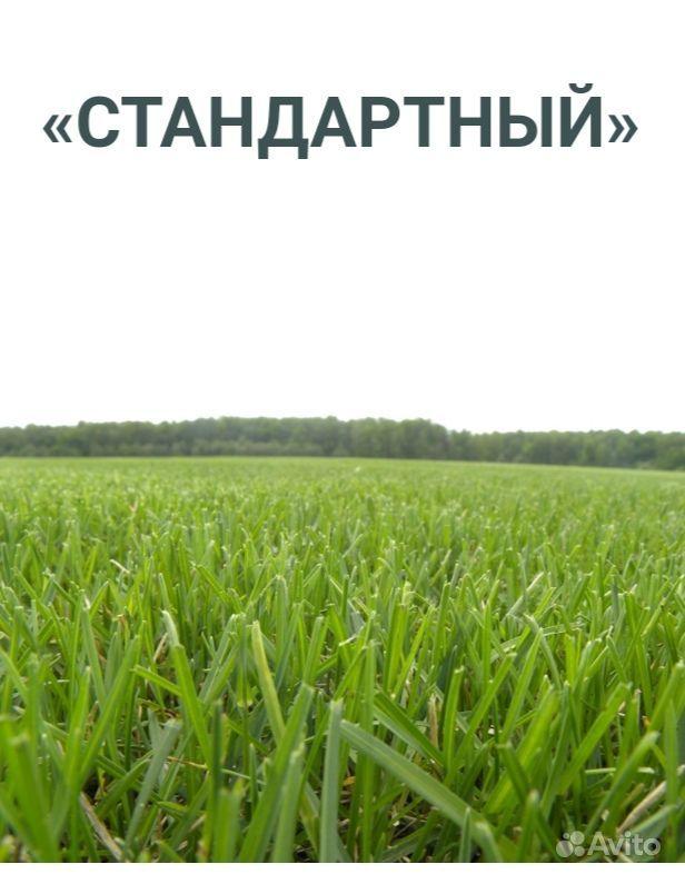 Рулонный газон купить на Зозу.ру - фотография № 2