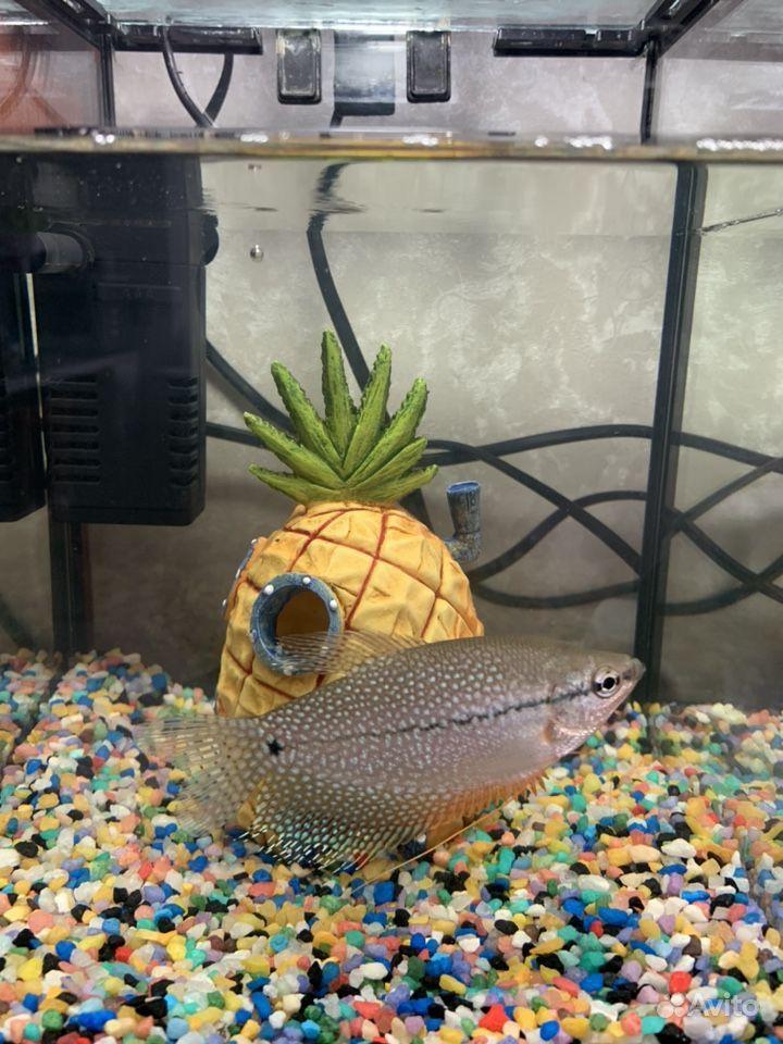 Аквариум с рыбкой купить на Зозу.ру - фотография № 2