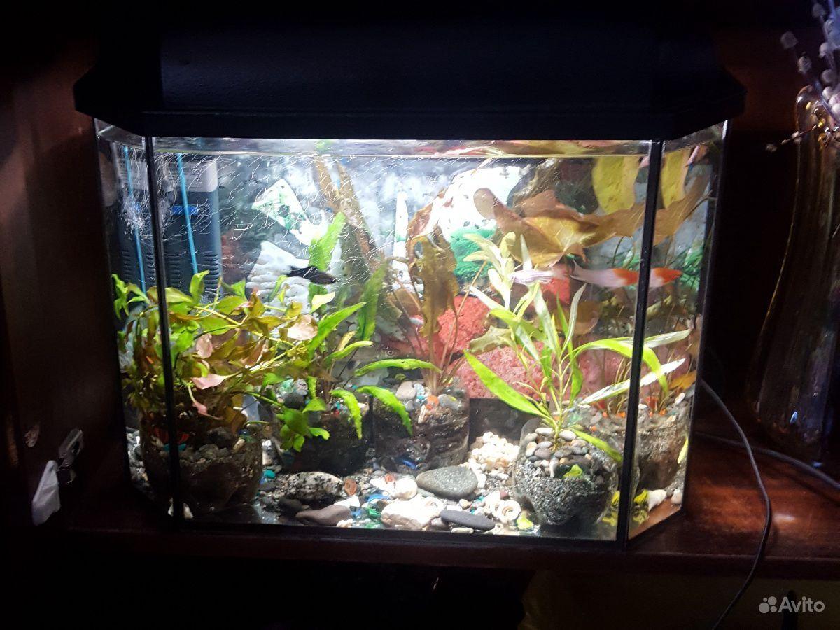Аквариум вместе с рыбками+фильтр+растения купить на Зозу.ру - фотография № 1