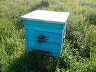 Улья для пчёл
