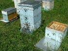 Пчелосемьи, пчелы Родинский р-он