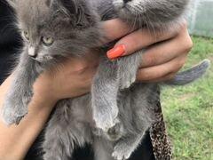 Котик (мальчик )