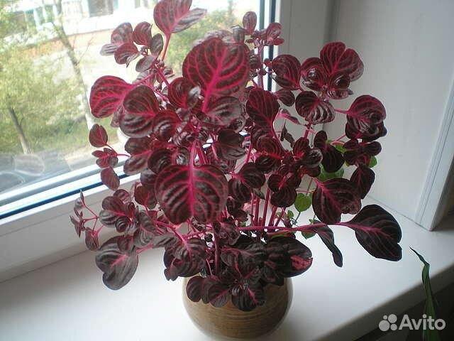 Авито тамбов цветы комнатные