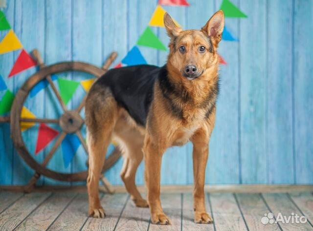 Овчаристый пёс Берти в добрые руки/ в дар купить на Зозу.ру - фотография № 5