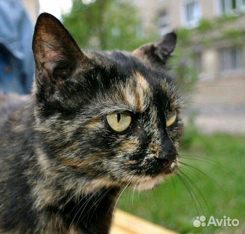 Стерилизованная кошка в добрые руки