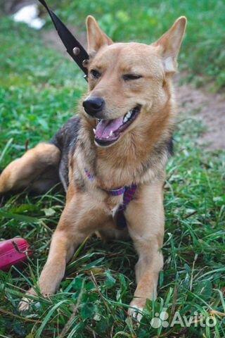 Собака ищет дом купить на Зозу.ру - фотография № 4