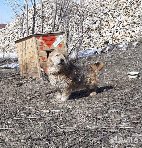 Маленькая собака 89635001357 купить 1