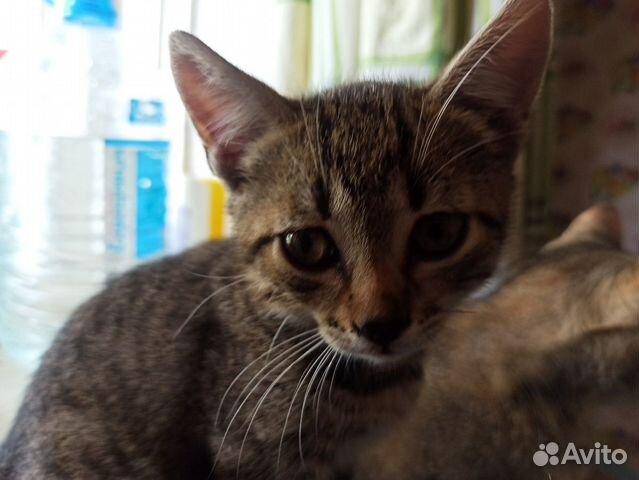 Котята ищут дом(двое)  купить 5