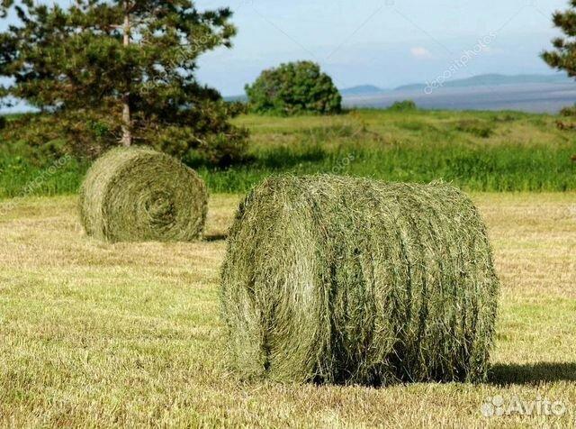 Рулоны 2020 сено луговое и доставка купить 2