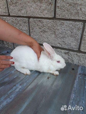 Кролик  89277704326 купить 1