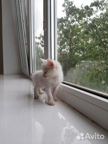Отдам котенка в добрые руки 89882282880 купить 3