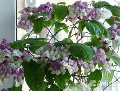 Самые красивые цветы для Вашего дома  купить 1