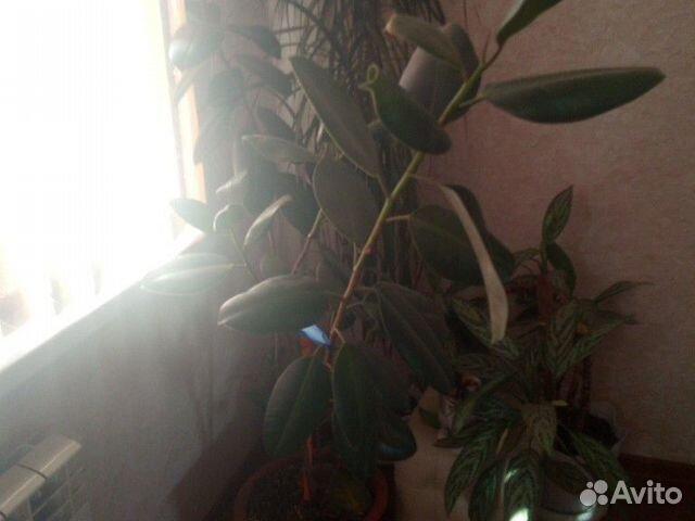Домашние цветы  89050600151 купить 6