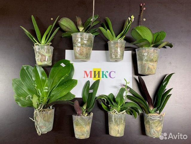 Орхидеи  89091710609 купить 1