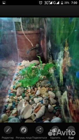 Aquarium 50 L