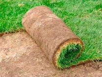 Рулонный газон «высший сорт» 2м на 0,40см — Растения в Саратове