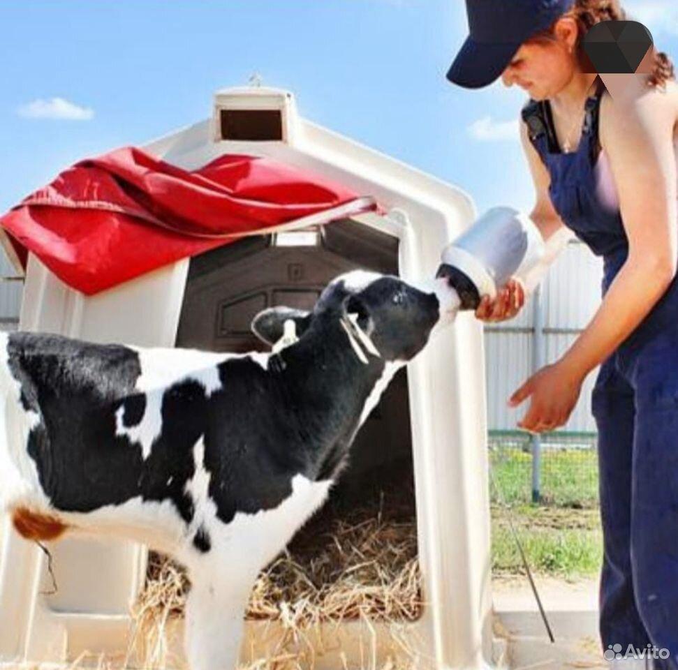 Заменитель молока кормилак 22/16 для телят с 7-го  89782699577 купить 3