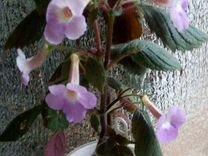 Цветы — Растения в Саратове