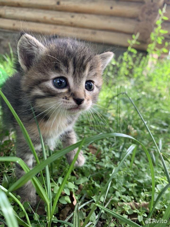 Кошка  89225313101 купить 3