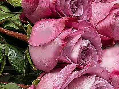 Роза. Оптом и в розницу