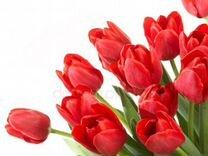 Тюльпаны Желтые, розовые, красные