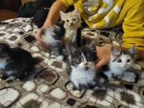 Красивые котятки в добрые руки