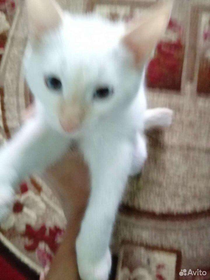 Cats  89526349624 buy 1