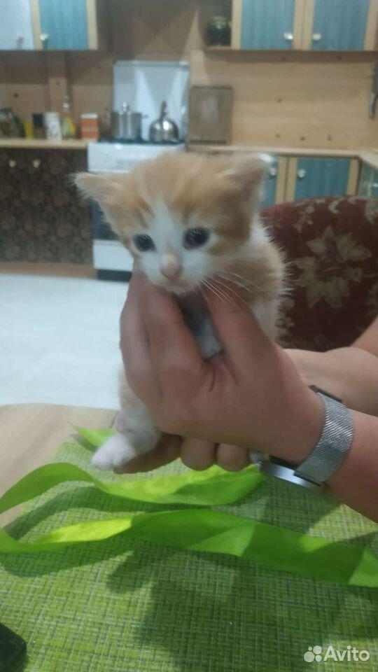 Кошка  89159749523 купить 1