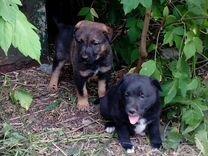 Красавчики щенки