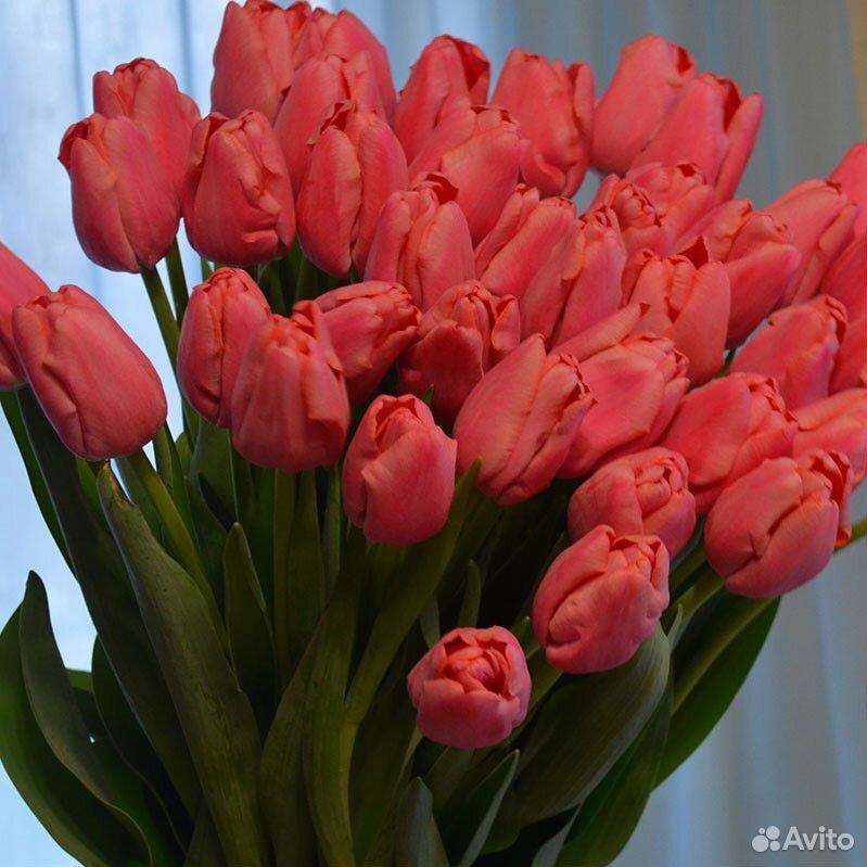 Тюльпаны  89092263980 купить 9