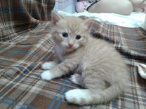 Котик-бродилка